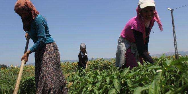 Tarımda nitratlı gübreler yasaklandı, AKP neyin peşinde?* – Esen Ocak