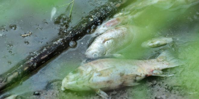 Bursa'da fabrika atıkları toplu balık ölümlerine yol açtı