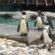 35 derecelik Bursa'ya fokla penguen getiren Altepe'den 6,5 milyonluk soğutma odası!