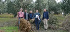 DSİ'den Mudanya'da zeytinlik katliamı
