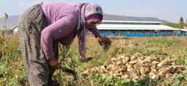 Sarıbal: Şeker piyasası nişasta bazlı şeker lobisinin insafına bırakılmamalı