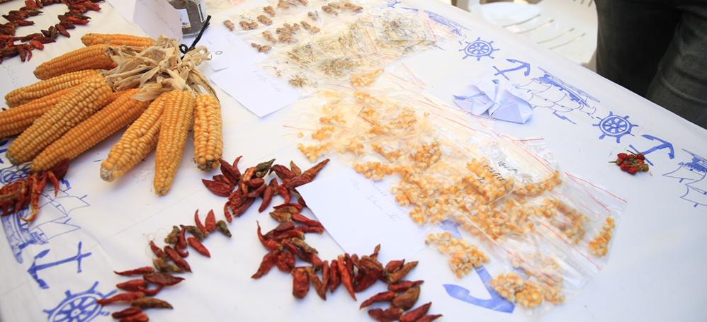 Yerel tohumlar Nilüfer'de takas edilecek